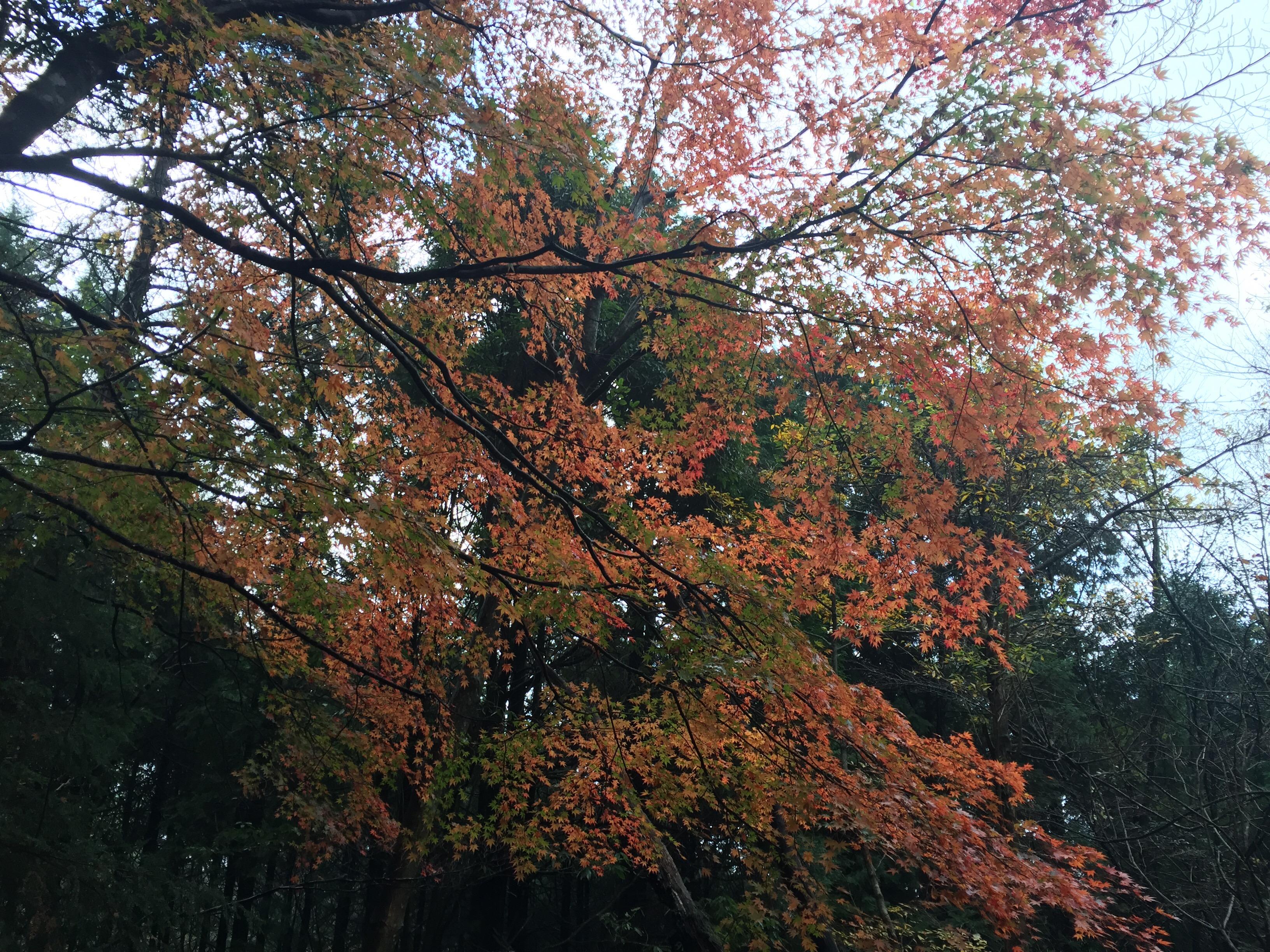 えびの高原 紅葉