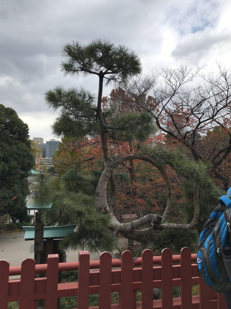 上野公園 名所江戸百景 月の松